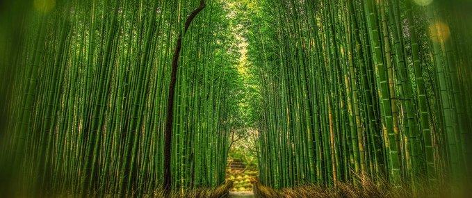 Arashiyama Bamboo Forest: The Jewel of the Storm Mountains