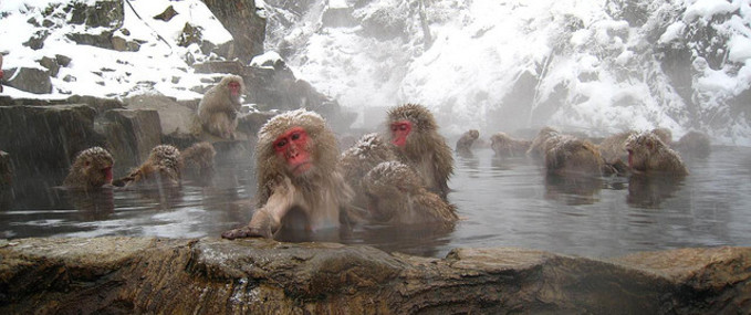 Relax and unwind in an onsen