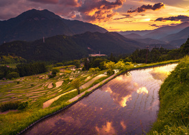 Japan's Rice Fields