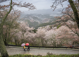 Visit the Kii Peninsula